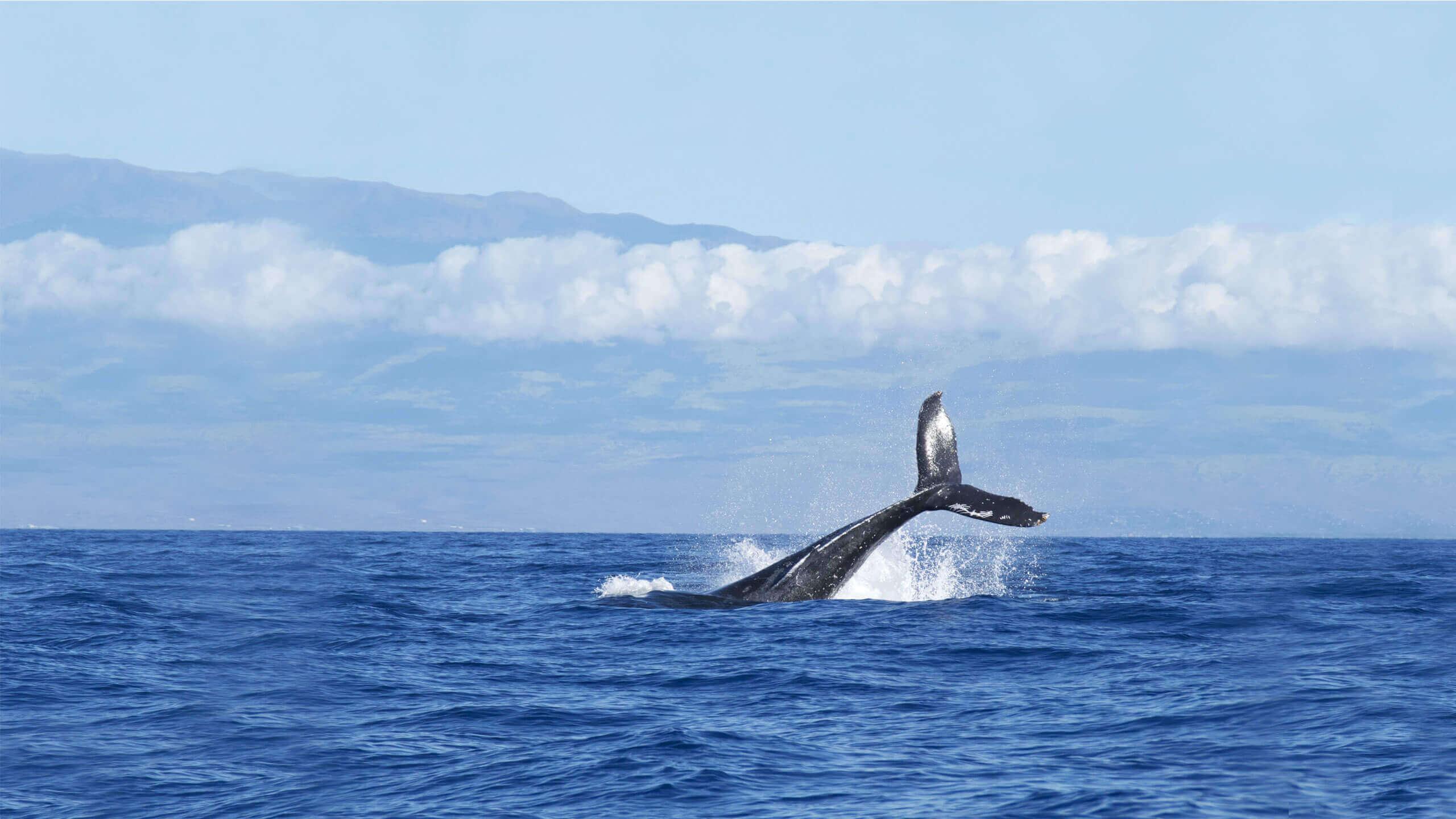 阿里巴巴-人工智能-鲸观